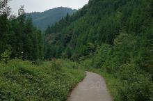 幽静的林间小道。