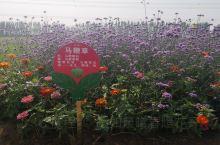 不要以为大片的紫色花就是薰衣草,也可能是马鞭草。特别喜欢欧舒丹马鞭草味道的护手霜、浴液、洗发水。