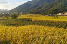 金秋时节,一眼望去田野里金黄色的美极了,田里还有辛勤劳作的人们。土地是我们的根,我们的希望,热爱的这