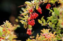 如果你喜欢秋色、喜欢秋叶、喜欢五彩斑斓的大自然,不妨来焉支山看看!         十月的焉支山是最