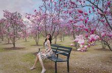 跟我一起去樱花的梦幻世界吧春游赏樱必去——上海辰山植物园 樱花盛开的季节,赶快带上相机去野餐吧,最近