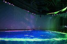 上海海昌公园唯美的海豚表演