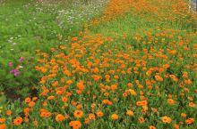风景优美,满山遍野的杜鹃花白玉兰还有油菜花,让人看着美不胜收