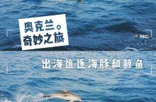 """奥克兰奇妙之旅丨出海巡游追逐海豚和鲸鱼的身影  奥克兰三面临海,有着""""千帆之都""""的美誉,在长白云的映"""