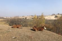 乌兰布统草原,景区门票130元/人,一张门票三天期限。进入十月份的乌兰布统草原,一改原有的绿色,到处