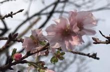 """位于东京市中心千代田区的""""皇居"""",是日本皇室居住的地方,又称江户城,城墙高耸,周围一圈护城河,风光旖"""