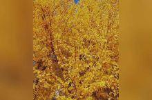 秋风萧瑟落叶尽,秋殇离落悲凉至,浅秋固然是萧条的,偏偏唯独喜欢秋的沉淀,秋的静美,秋的硕果累累