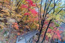 天桥沟是我在国内去过的赏枫胜地当中是最美的地方,有机会还会去的。