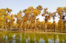 塔里木胡杨林国家森林公园集塔河自然景观、胡杨景观、沙漠景观为一体,是世界上最古老、面积最大、保存最完