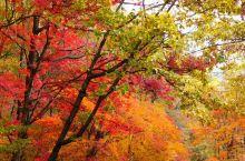 """天桥沟森林公园是国家4A级风景旅游区,国内十大著名赏枫胜地之一。""""层林红枫""""是著名的天桥八景,此外还"""
