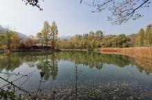 滴水壶位于延庆区的百里画廊景区,随着季节变化,天气逐渐变凉,这里的彩叶林呈现出五彩缤纷的颜色,芦苇荡