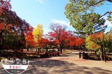奈良公园是日本的国家名胜区,它也是去日本游玩的游客的必游场所。在这里可以近距离的接触的小鹿,鹿儿们特