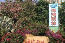 海南真是个奇妙的地方,蓝天白云,椰风海韵,小区四季花开,树上结满热带水果。一半海湾一半雨林,好似一幅