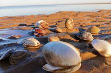 秋冬的海岸线,蓝天大海,今天随着退潮来到海边,重拾童心亲近大海,随意捡的小贝壳拍照留念 附带攻略: