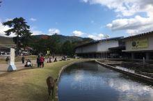 奈良公园的路鹿