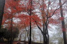 周末去莫干山,山上极美的枫叶红。