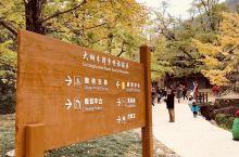 桂林海洋乡,银杏正当时!