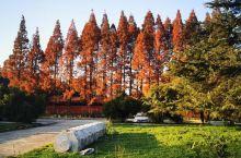 襄阳广德寺的景色!是不是有一种获得了新生的感觉?建筑浑然天成,古色古香,景色错落有致,色彩斑斓……加