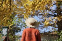 秋天的感觉越来浓烈 杭城的秋季总是来得短暂且鲜明 清晨空气中飘来的桂花香 大街小巷旁开始泛红的枫叶