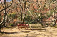 小豆岛,寒霞溪徒步 小豆岛之旅,刚好是寒霞溪看红叶🍁最好的时候。 于是一日的环岛游变成了一日的徒步旅