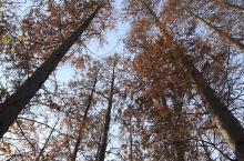 长兴岛郊野公园,秋色正美