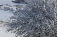 乌兰布统冬日雪景