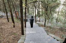 和平大桥东下坡,很清净的地方,竹林寺就在山上