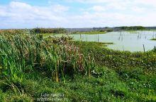 Jan 3, 2020 # Lake Apopka  #野生动物 #湿地 #碧水蓝天 # 佛罗里达州