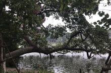 还剑湖是越南河内市中心的有景点,在步行街旁,还剑湖有一段历史故事,如今成为人们的休闲场所,特别是湖旁