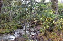 索道上方天气不好看不见冰川,唯有小溪树木。
