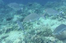 巴里卡萨岛   【景点攻略】 详细地址: 邦劳岛西南方向外侧离岛  交通攻略: 螃蟹船,船程大概1h
