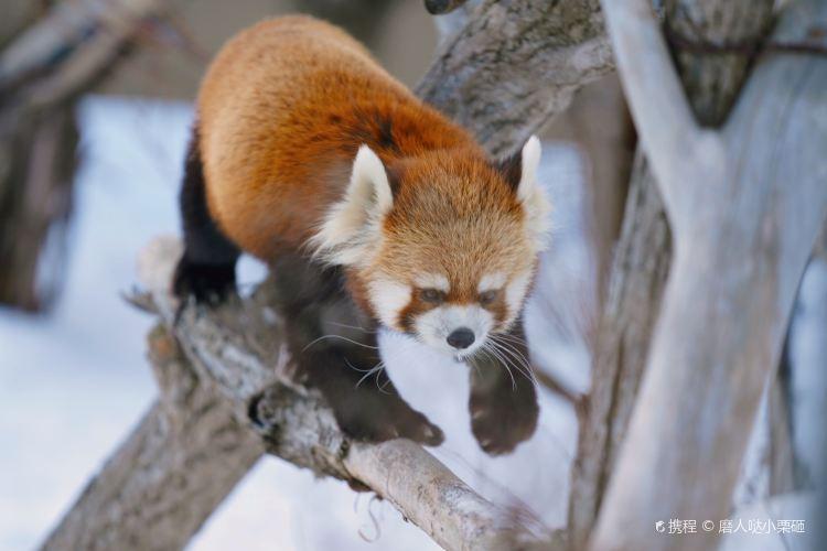 Sapporo Maruyama Zoo4