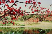 春天来了  走在一个人的公园,一切美景揽于眼里。骄艳的海棠,红艳艳的,仿佛在对我说:我是这里最亮眼的
