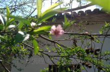 今日阳光明媚,赏花的季节