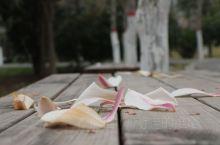 中原福塔  春暖花开的时节,出门短暂放风。