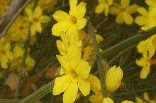 公园的各种花都开了,天气渐渐暖和了,春天真好!