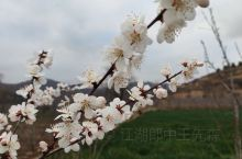 春意昂然,花儿朵朵开,希望疫情早日结束