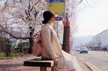 镇海港 韩国镇海樱花节~惊喜景点全攻略! 又到了一年一度的樱花季 韩国镇海樱花节,每年3月中旬到4月