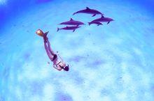 埃及红海的隐秘泻湖,是海豚自由的乐园,也是BBC蓝色星球取景地  非洲大陆东北部与阿拉伯半岛之间,有
