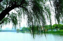 """南昌市新建区下大力气实施礼步湖的大改造、大整治,将这个原来又脏又臭的""""一湖死水""""变成现在的""""一湖清水"""