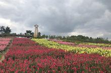 川南大草原鲜花盛开