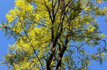 昨天,一场大风竟然把北京的春天刮成了秋天~~   地址:北京东小口森林公园