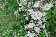 宁波植物园 万紫千红总是春。 之前为了把住春天的尾巴,一番折腾从大榭跑到了植物园。 进园的瞬间就被那