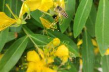 起早的蜜蜂
