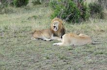 在辽阔的稀树草原,近距离的观看野生动物,好一幅壮观的画面!