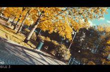九月的赫尔辛基 树叶茂密 浓浓秋意 阳光正好