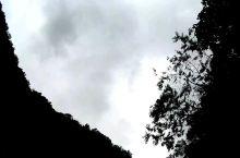 從下往上拍,在谷底看見錐鹿古道中隱藏的台灣~可惜天氣不好,如果是晴天,藍天白雲又是另一種風情 錐鹿古