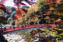 爱知县香溪谷的红叶打翻了调色板:红的黄的叶子在阳光下通透明亮绚烂夺目。在全日本排名第四位。 现在只有