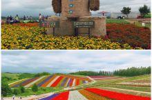 四季彩の丘,才是心中北海道该有的花田!相比而言,富良野的富田农场,真的太小儿科了~  15公顷的广阔