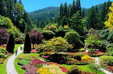 【加拿大温哥华岛】世界上最美的花园~布查特花园惊艳到你的眼球…